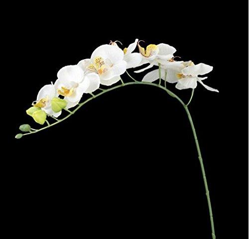Go_believe – Ramita de orquídea Artificial con 8 Ramas de Flores de plástico Blancas