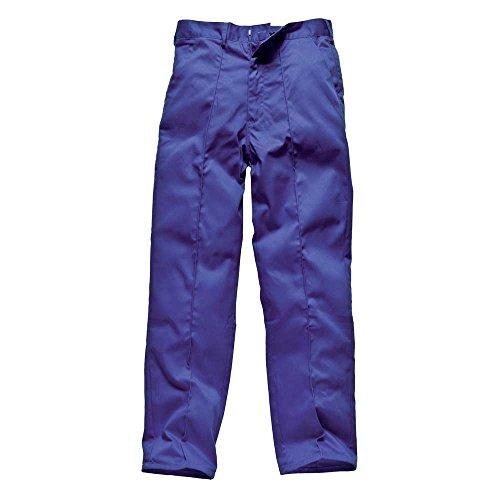 Dickies - Pantalon -  Homme Royal