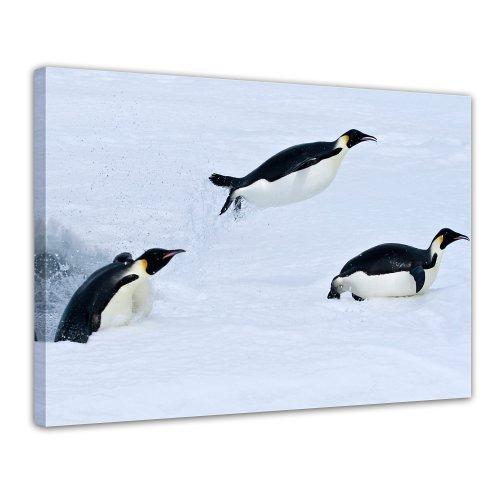 II - Bild auf Leinwand - 120x90 cm 1 teilig - Leinwandbilder - Bilder als Leinwanddruck - Wandbild von Bilderdepot24 - Tierwelten - Leben in der Arktis - schlitternde Pinguine (Pic Von Pinguin)
