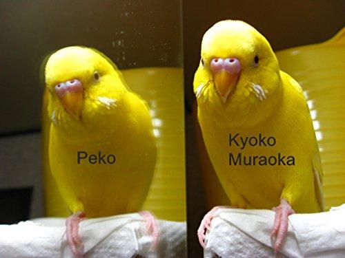 Peko (English Edition)