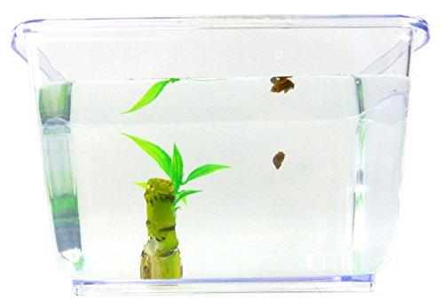 Aquarium Schnecke im Set Posthorn Wasser Schnecke braun mit Pflanze und Aquarium Kinder Erwachsene Aqua Snail Plant Einsteiger Starter Set (2Stk mini Teufel?) 4798