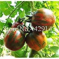 Pinkdose Leche Tomate Rojo Bonsai, Tomate Cherry Planta Orgã¡Nica Planta de Ourdoor de Frutas y Verduras para huerto casero 200 pcs/Bag para la Venta: 8