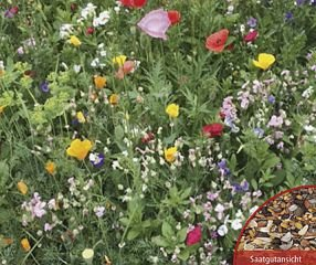 Bobby-Seeds Blumen Samen Blühender Naturgarten Mischung BIO Portion