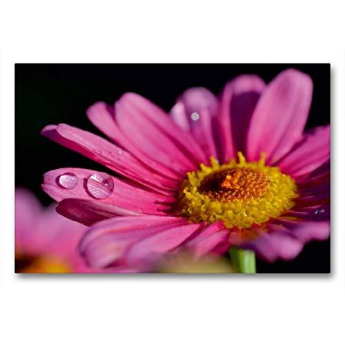 Calvendo Margarita de Color Rosa, 90x60 cm