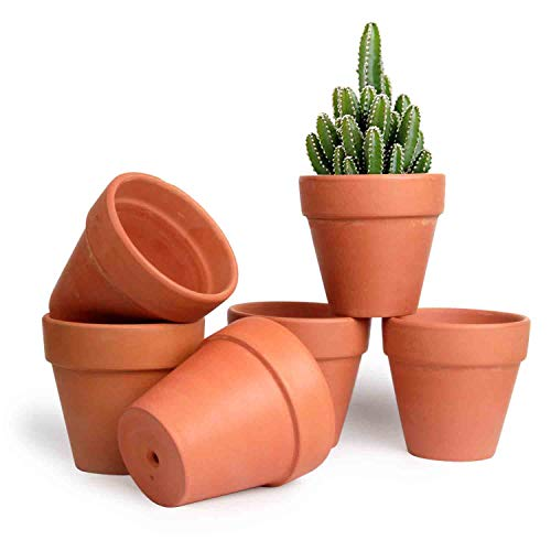 t4u 10,7cm pianta grassa vasi in terracotta set di 6 per piante in miniatura
