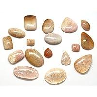 Heilung Kristalle Indien Fossil Koralle 7Stück Lot Of poliert Semi Precious Edelstein gratis eBook über Crystal... preisvergleich bei billige-tabletten.eu