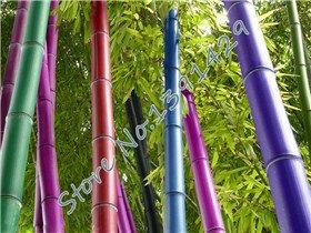 Promotion 50 graines / sac 5 couleurs Graines bambou, plante des arbres Bonsai Moso, le taux de germination de 95%, l'usine rouge