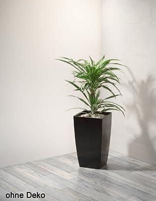Gartenfreude Pflanzkübel Kunststoff für innen und außen, Weiß, 2 Stück, 20 x 20 x 35 cm von Weles auf Du und dein Garten