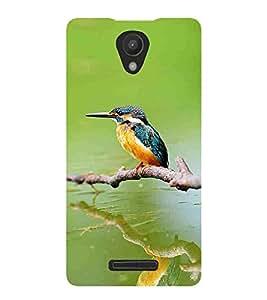 For Xiaomi Redmi 3s :: Xiaomi Redmi 3s Prime :: Xiaomi Redmi 3 Plus Bird, Green, Sparrow, Magnificent Pattern, Printed Designer Back Case Cover By CHAPLOOS
