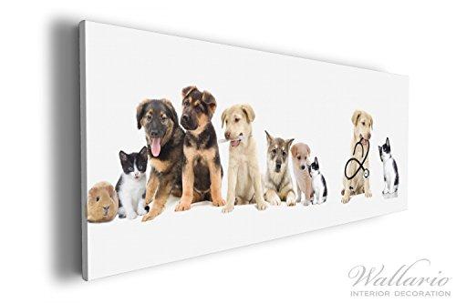 Wallario XXL Wallario Leinwandbild Süße Haustiere - Katzen, Hunde, Hamster, Küken - 60 x 150 cm...