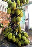 Shop 360 Live Jackfruit Tree
