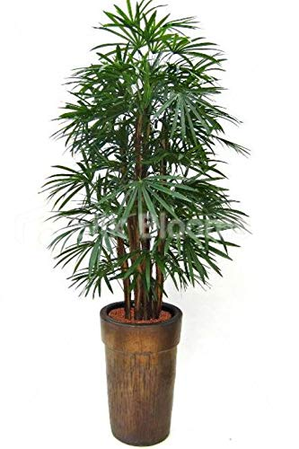 Silk Blooms Ltd Premium Kunstpflanze Raphis Palme mit echter Palmenrinde und Holzstamm 190 cm