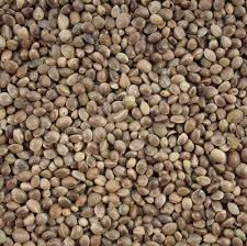 Maltby's Stores 20kg Hemp Seed by MALTBY'S CORN STORES