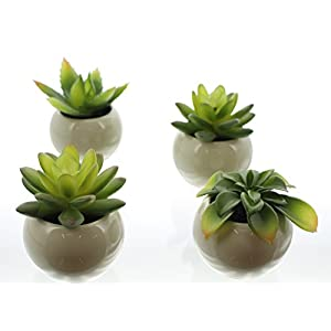 Mini-Sukkulenten im Topf im 4er Set