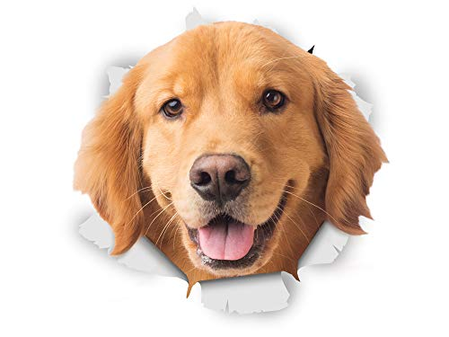 Winston & Bear 3D Hund Aufkleber - 2er-Pack - glücklich Golden Retriever für Wand, Kühlschrank Golden Retriever Hund Aufkleber