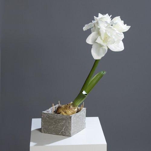 Amaryllis im Gefäß, 60 cm, weiß Kunstblume Kunstpflanze Dekopflanze