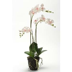 Orchidée Phalaenopsis artificielle PABLA en motte, blanche-rose, 70 cm - fleur artificielle / orchidée décorative - artplants