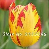 Vistaric 20 piezas de semillas de tulipanes holandeses flor de bonsái hidropónico loro tulipán, plantas perennes en el jardín de su casa - Shows Love 12