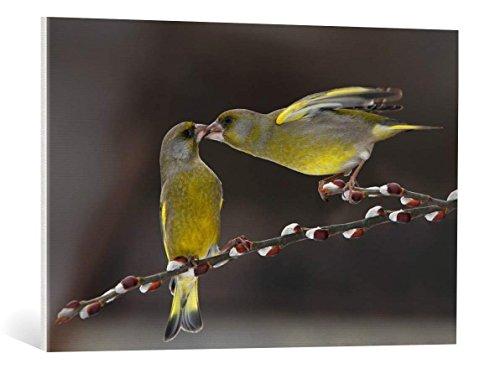 cuadro-en-lienzo-tomas-sereda-love-on-brach-impresion-artistica-de-alta-calidad-lienzo-en-bastidor-9