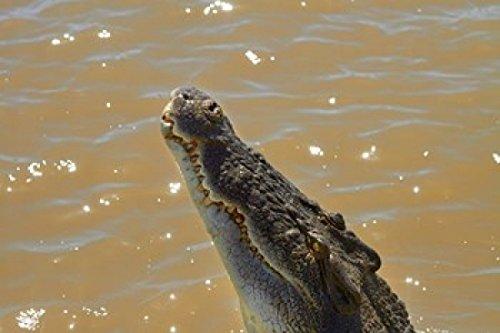 david-wall-danitadelimont-jumping-crocodile-cruise-adelaide-river-australia-photo-print-9144-x-6096-