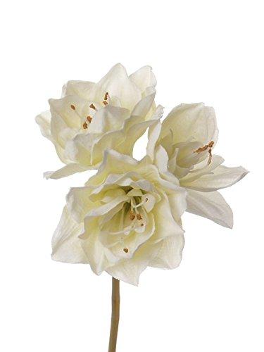 artplants Set 6 x Künstliche Amaryllis DOLYN, Creme, 20cm – Kunst Ritterstern/Kunstblume