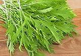 PlenTree Mizuna semillas de mostaza suave dulce crece rápidamente Conde 100 Pkt