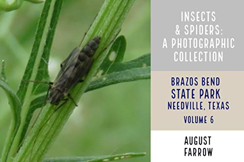 Insects & Arachnids: A Photographic Collection: Brazos Bend State Park:  Needville, Texas - Volume 6 (Arthropods of Brazos Bend State Park) (English Edition)