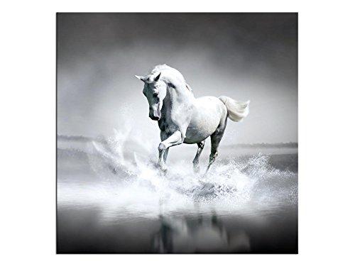 Preisvergleich Produktbild kunst-discounter Weißes Pferd Bild Leinwandbilder Wandbilder Foto auf Leinwand A05517 Größe 30 x 30 cm