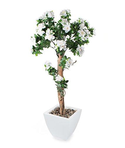 closer-to-nature-rbol-de-interior-rododendro-color-blanco