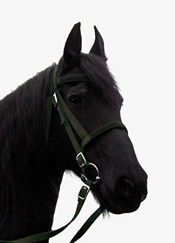 JF-équitation Bridon Nylon avec rênes sans dentition, Olive, Pony, ainb de 98-11-02