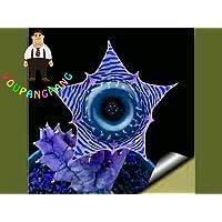 Shopmeeko 120 Stück Stapelia Pulchella Pflanzen Lithops Mix Sukkulenten Rohstein Kaktus Pflanzen Selten für Hausgarten Blume Bonsai Pflanzen: 3