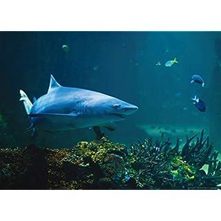 AG DESIGN Shark Giant Wall Poster, Non Woven, Multi-Colour, 160 x 110 cm
