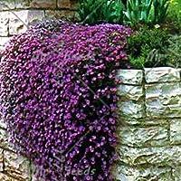 Shopmeeko 100 unids/Bolsa Planta de Berro de Roca Escalada Planta de Cebada Plantas de Flores Bonsai perennes Planta de Crecimiento Natural Decoraciã³n para el hogar Garde: 1