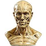 Modèle Humain Crâne Anatomie Muscle Mannequin de Dessin 10cm de Haut Jaune Antique