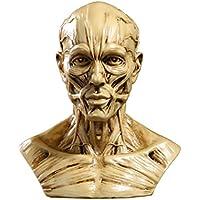 Modelo Cabeza de Cráneo Humano Hueso Muscular Anatómico Médico de Dibujo Amarillo Antiguo
