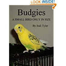 Budgies A Small Bird Only In Size