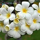50 PC-A Tasche Plumeria Samen Seltene Blume im Bonsai-Ei Blumen-Samen New Sementes Home Garten Pflanzen China Geschenk Seltene-flower-Samen