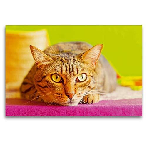 Calvendo Premium Textil-Leinwand 120 cm x 80 cm quer, Gestreifte Katze auf dem Sprung | Wandbild, Bild auf Keilrahmen, Fertigbild auf echter Leinwand. unsere liebsten Hausgenossen Tiere Tiere - Gestreifte Leinwand