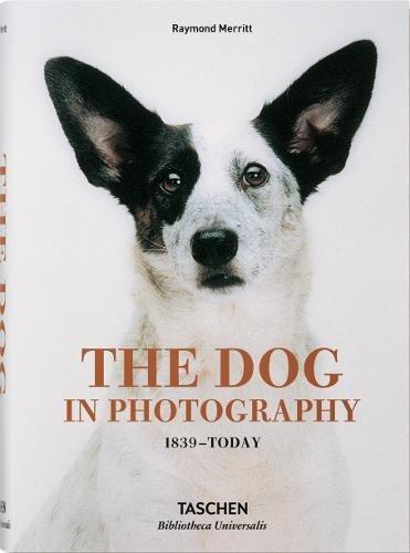 Le chien dans la photographie 1839 à aujourd'hui