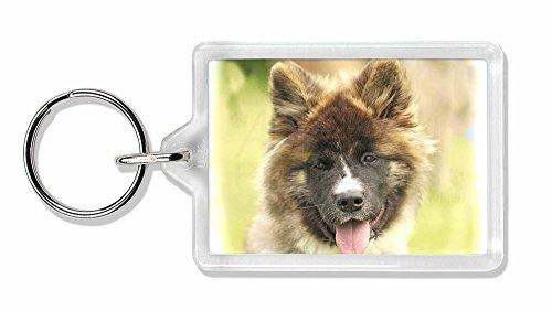 Schöne Akita Hund Foto Schlüsselbund TierstrumpffüllerGeschenk (Akita-hund Foto)