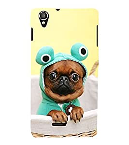 Vizagbeats French Bull Dog Back Case Cover for Lava Iris 800