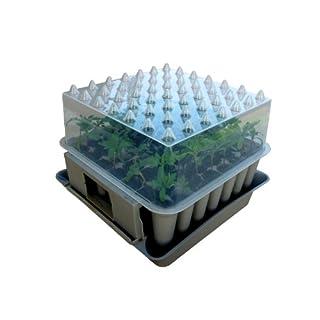 Agralan MA100 Mini-Gewächshaus für Pflanzen-Stecklinge