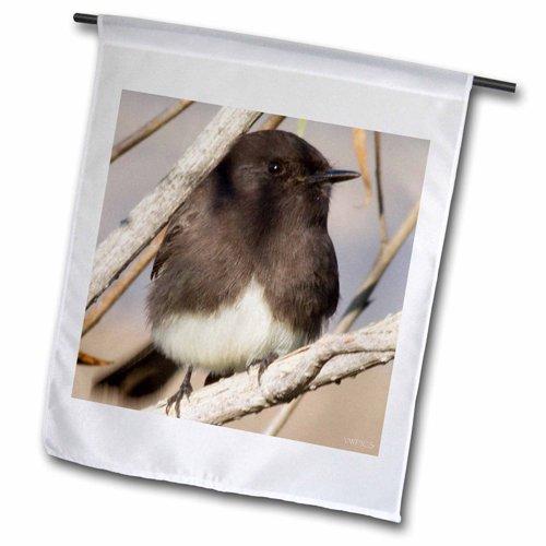 3drose-fl-45760-2negro-phoebe-sayornis-nigricans-reserva-de-back-bay-california-bandera-de-jardn-18x