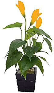 Fourwalls Polyurethane Artificial Real -Touch Calla Lily Plant (40 cm, Yellow)