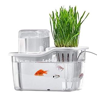 AMZ BCS Mini-Wassergarten-Aquarium, Hydrokultur-Anbau-System-Aquarium mit organischen Aquaponischen Sprossen und Kräutern Aquarium Starter Kit Urlaub Geschenk für Vater Ehemann