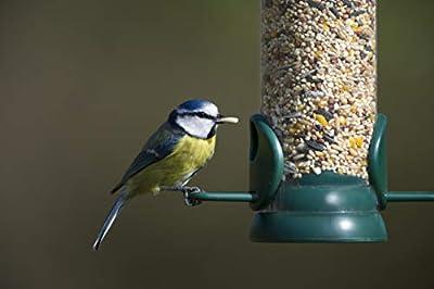Jacobi Jayne Seed Bird feeder