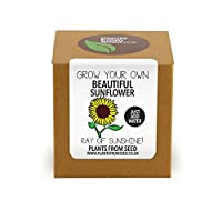 Plants from Seed Grow Your Own Sunflower Plant Kit