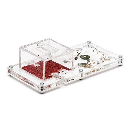 4926e01e1bc5fe Test Kit Ant Farm - Ameisenfarm 20x10x1 (Kostenfreie Ameisen mit ...