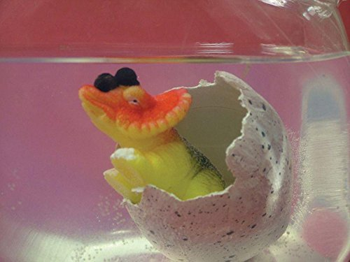 BUSDUGA Wachsender Dinosaurier im Ei (groß) - 11cm - ins Wasser legen und nach 12 bis 24 Stunden schlüpft der Dino (Schlüpfen Dinosaurier Ei Spiele)