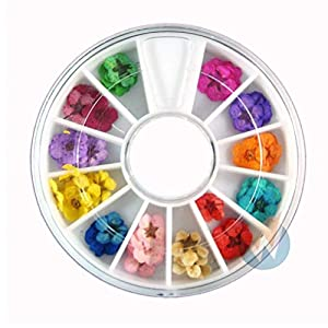 Gamloious eale trockene getrocknete Blumen 12 Farben Bundle Set im Rhönrad